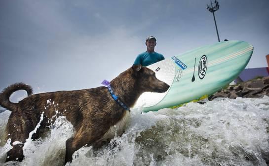 O cão Parafina em prancha entra no mar com surfista Picuruta Salazar, em Santos