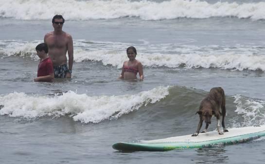 Como auxílio de um surfista, que empurra a prancha, ele desliza sobre as ondas e chama a atenção dos banhistas na praia