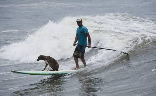 O cão Parafina em prancha com surfista Picuruta Salazar, em Santos